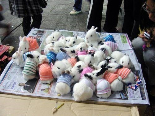 bunnies,sweaters,cute,bunny