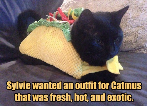 costume,taco,catmus,Cats