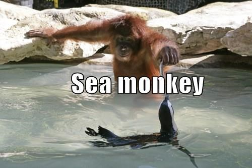 sea,monkey,fish,penguin