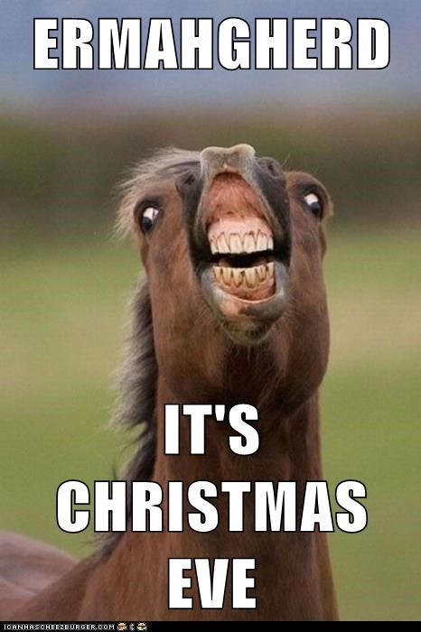 animals christmas Ermahgerd apple horse christmas eve