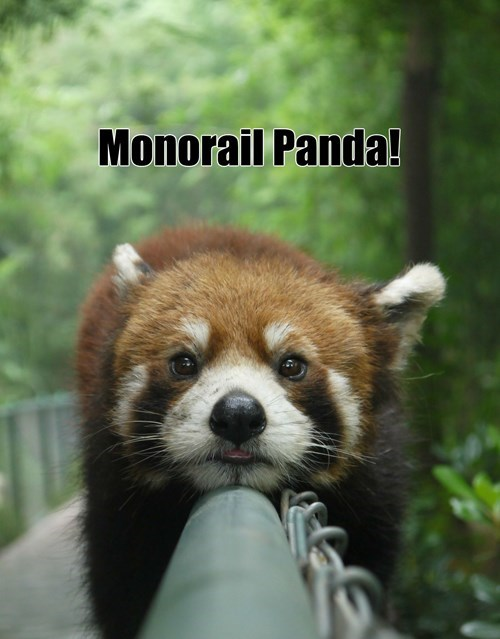 red panda,monorail