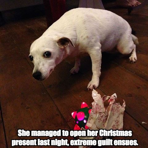 christmas,dogs,present,toys,guilty