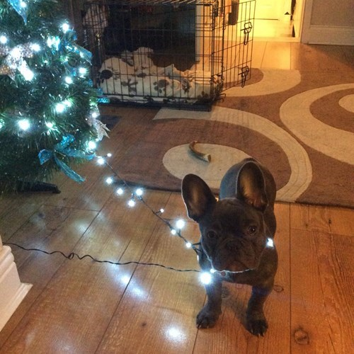christmas,dogs,puppy,christmas tree,cute