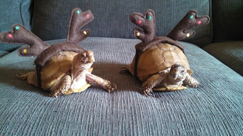 christmas,turtles,cute