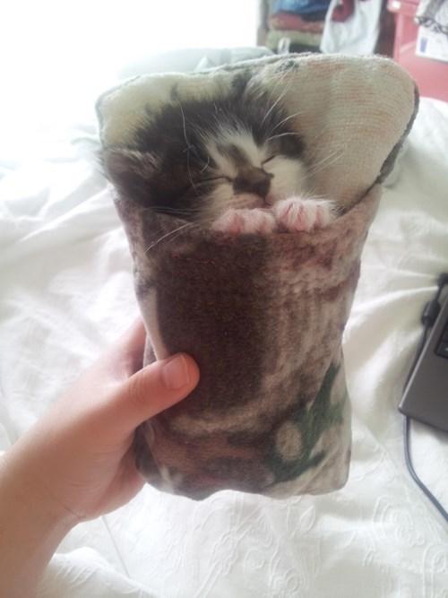 kitten cute Cats sleeping - 8406148096