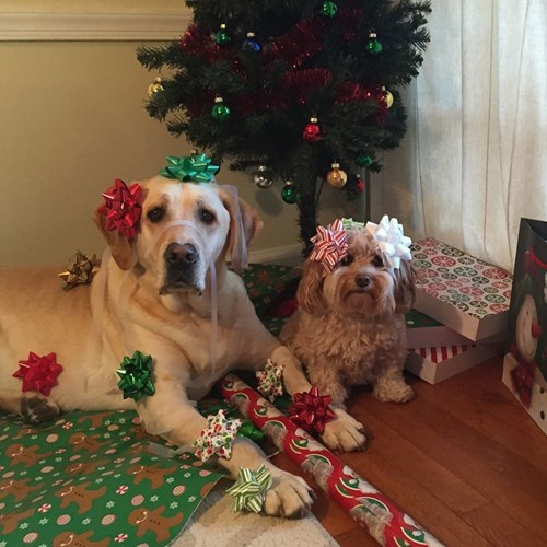 christmas dogs wrapping gifts