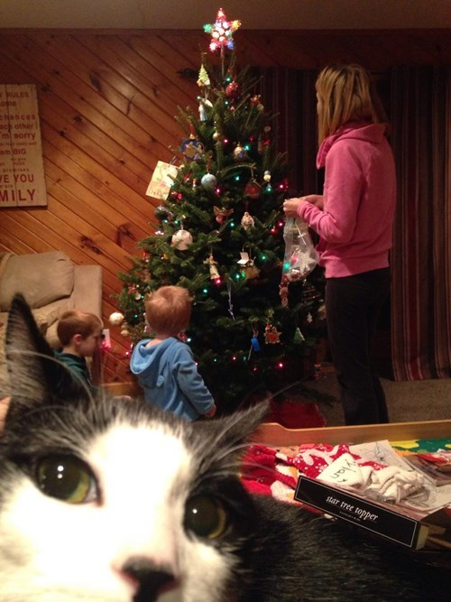 christmas photobomb kids christmas tree parenting decoration Cats