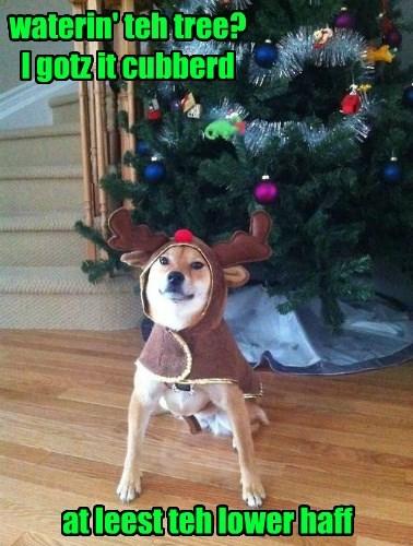 christmas dogs reindeer christmas tree shiba inu - 8406254080