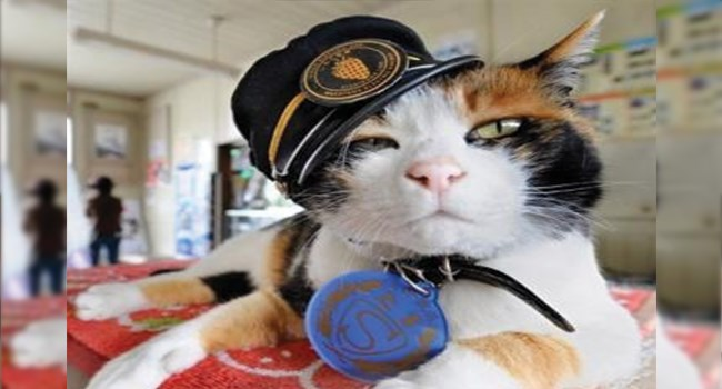 train station cat the Tama Goddess
