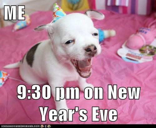 dogs,new years,puppy,tired