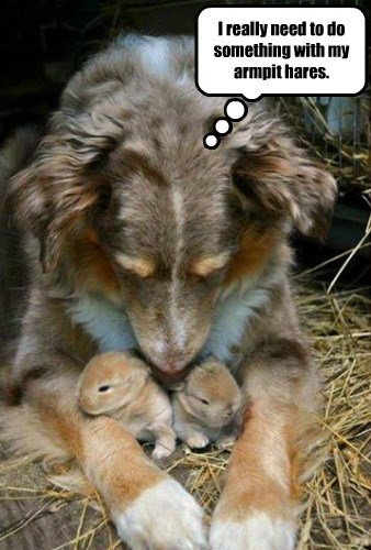dogs hare armpit puns - 8406634240