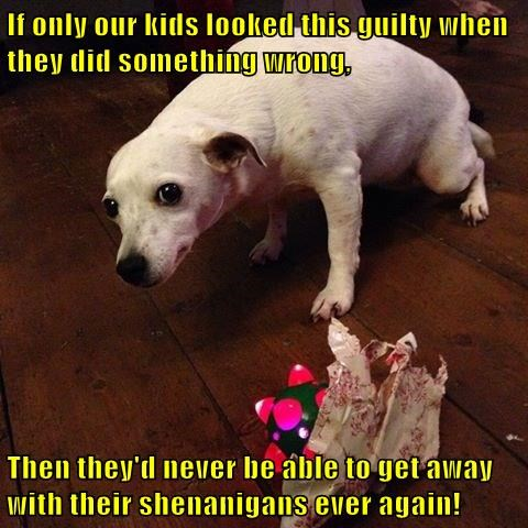 animals dogs captions bad dog funny - 8407140864
