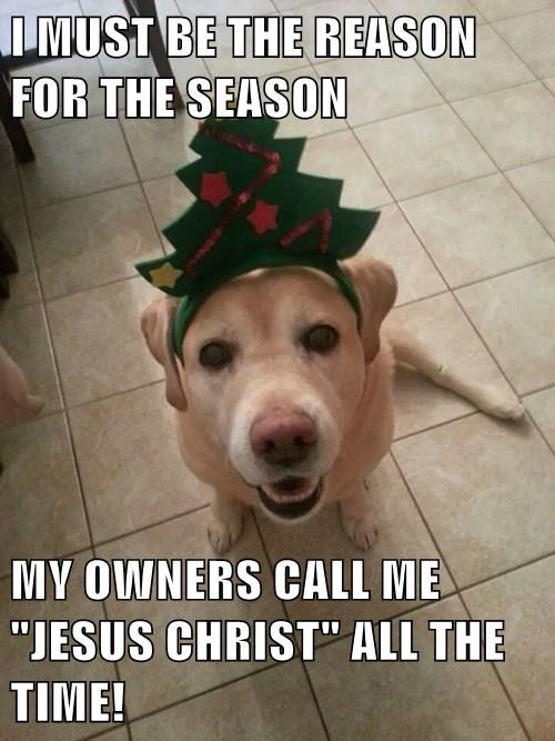 animals jesus christmas dogs confused - 8407188736