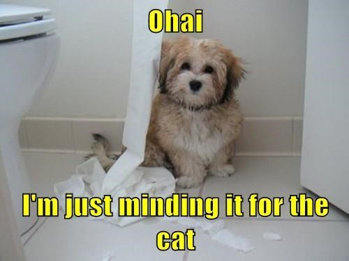 dogs,toilet paper,Cats