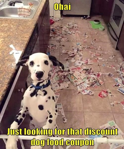 dogs dalmation mess - 8407970816