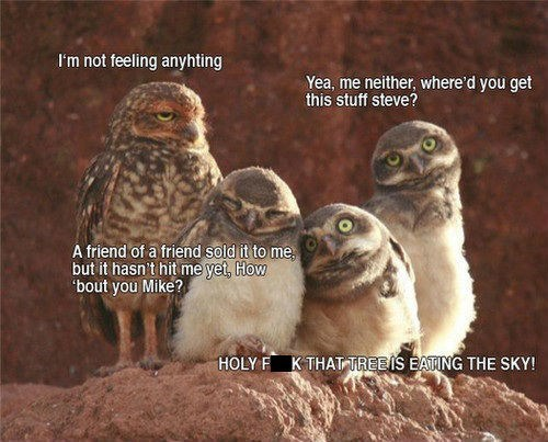 drugs hallucinogens owls funny after 12 - 8407976704