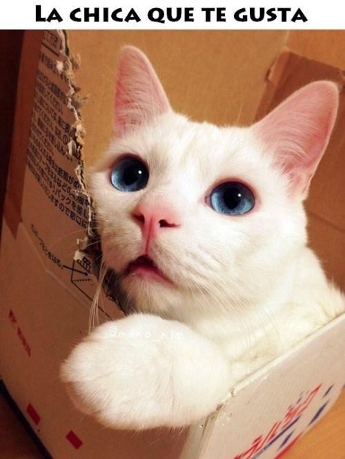 gatos bromas Memes animales - 8408499200