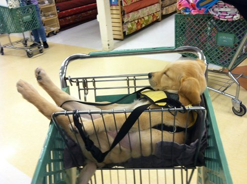 christmas,puppy,shopping,cute,sleeping
