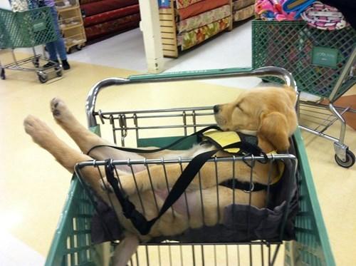 christmas puppy shopping cute sleeping - 8408581632