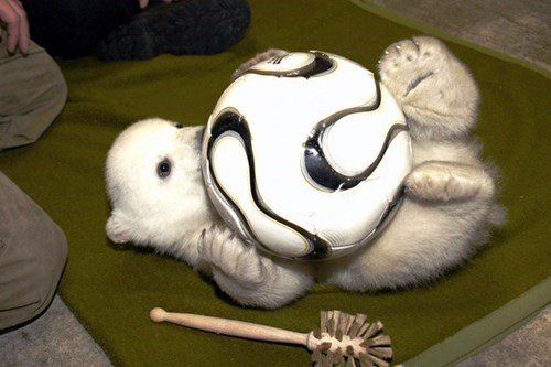 polar bear cub cute - 8408607232