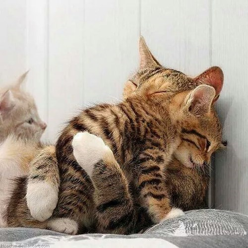 kitten cute hugs Cats - 8408663296