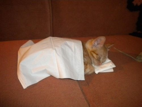 tissues,kitten,cute,kleenex