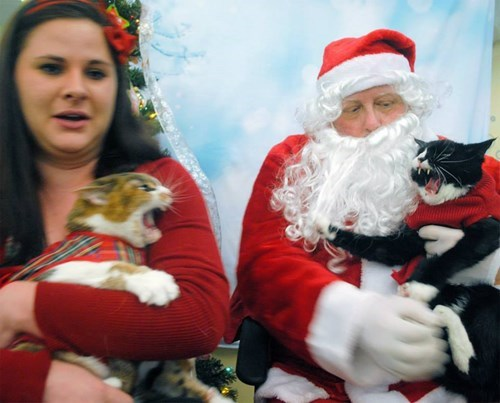 christmas bad idea santa Cats fail nation - 8408738048