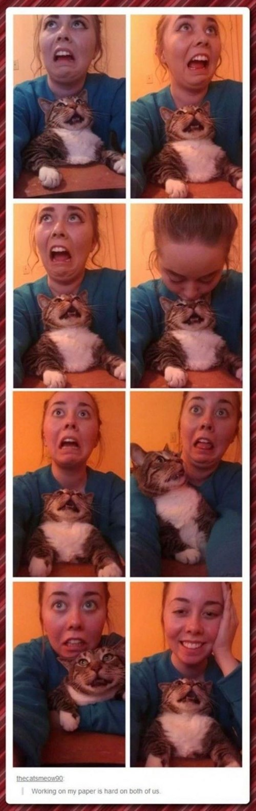 school,tumblr,Cats,failbook,g rated