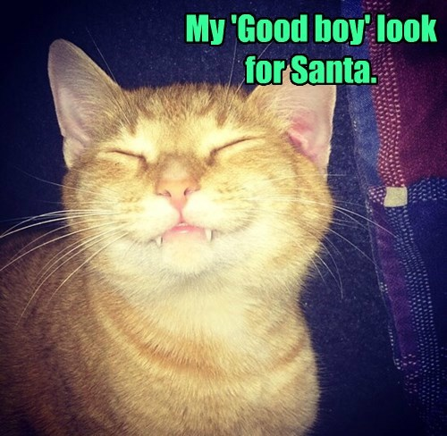 tabby,good boy,santa,Cats