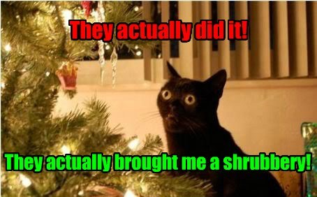 christmas,monty python,shrubbery,Cats,black cat
