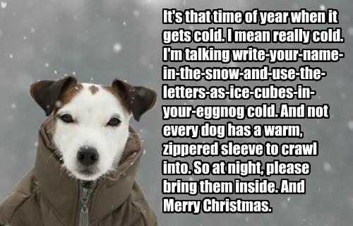 It's that time of year when it gets cold. I mean really cold. I'm talking write-your-name-in-the-snow-and-use-the-letters-as-ice-cubes-in-your-eggnog cold. And not every dog has a warm, zippered sleeve to crawl into. So at night, please bring them inside. And Merry Christmas.