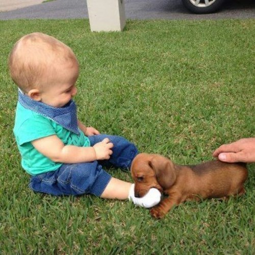 dogs baby puppy cute parenting noms - 8410058496