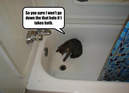 Cats bath scared