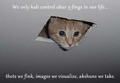 memes animals - 8410126592