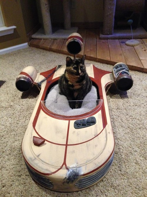 star wars cute Cats - 8410282240