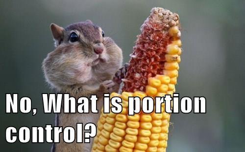 animals corn new year squirrel noms - 8410446592
