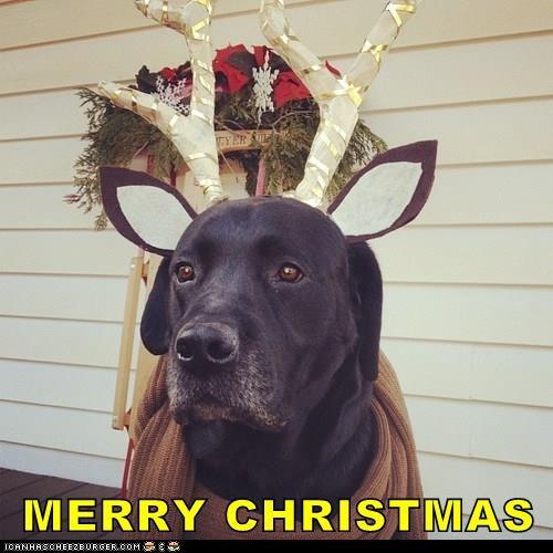 animals antlers Black Lab christmas - 8410451712