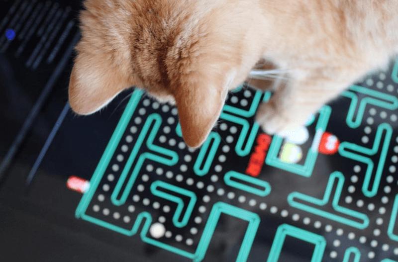 cool arcade adopt dont shop adoption cute cat cafe chicago catcade - 8411141