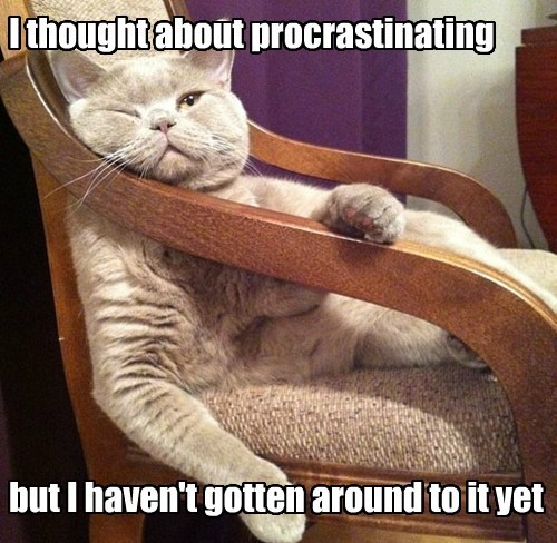 procrastination,captions,Cats,funny