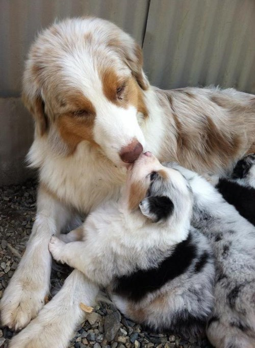dogs,kids,puppy,kisses,cute,parenting