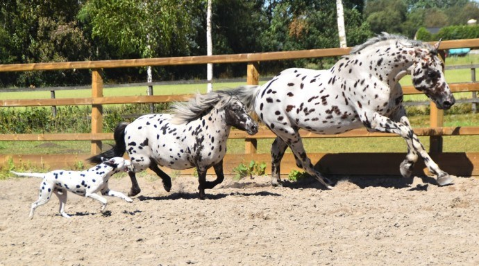 aww friendship dalmatian cute horses unique beautiful - 8412165