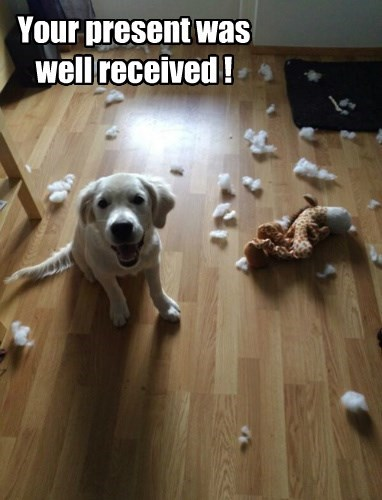 Funny picture and meme of a dog that has destroyed his toy and looks ready for another one.