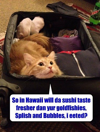 tabby if i fits i sits suitcase Cats - 8412592384