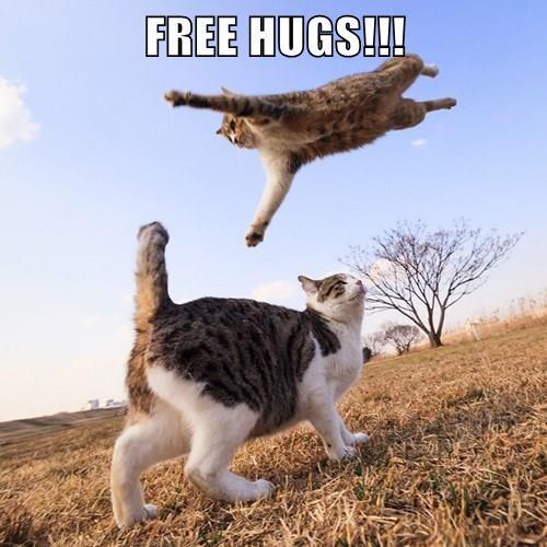 animals captions cute hugs Cats funny - 8412680960