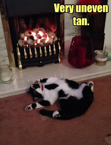 tan,fire,Cats