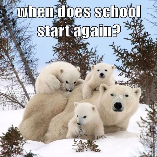 school,kids,polar bear