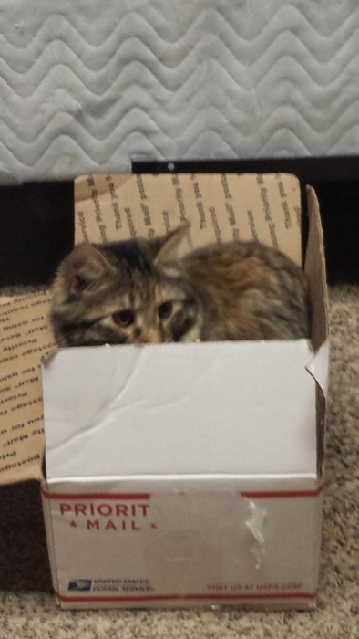 box,kitten,if i fits i sits,Cats,mail