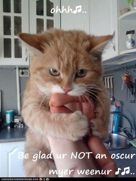 lolcats - Cat - ohhhd. Be glad ur NOT an oscur myer weenur Sd.. ICANHASCHEEZBURGER.COM E