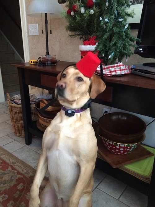 cool accessories dogs FEZ i have no idea what im doing - 8413066496