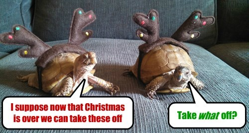 christmas reindeer antlers turtles holiday - 8413113600